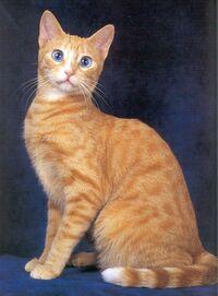Ojos-azules-cat-facts