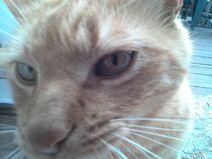 Garfield getting in my screen