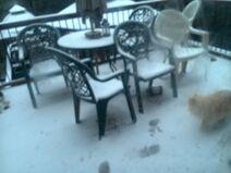 Tigger in the Snow