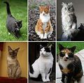 250px-Collage of Six Cats-02-1-.jpg