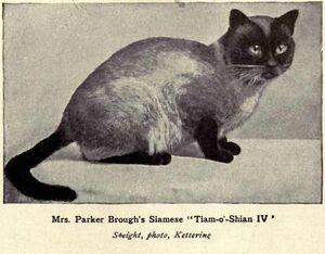 Tiam Siamese