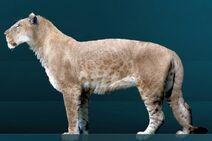 Panthera leo atrox Sergiodlarosa 1