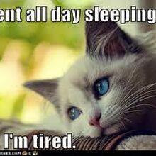 Funny Cat Meme Photos Cats Wiki Fandom