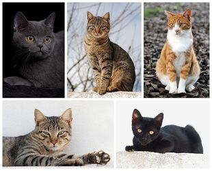 Cat Breed Poster