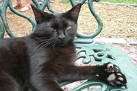 Polydactylcats