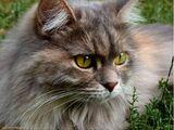 Cat Senses