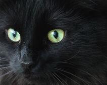 Judy's eyes
