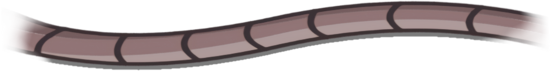 DANGO WIRE