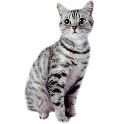 image catd jpg cats of the clans wiki fandom powered by wikia