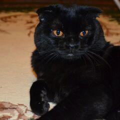 Чёрный Взрослый Самец.