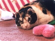 Cat scarlett