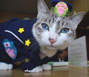 Police-cat-kyoto