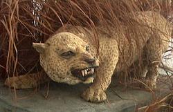 Чучело занзибарского леопарда