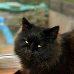 А вы бы назвали этого кота дьявольским?