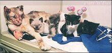 Cat scarlett-kits2