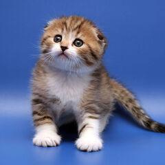 Полосатый котёнок.