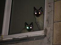200px-Котыс глазами