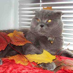 Самец в листьях.
