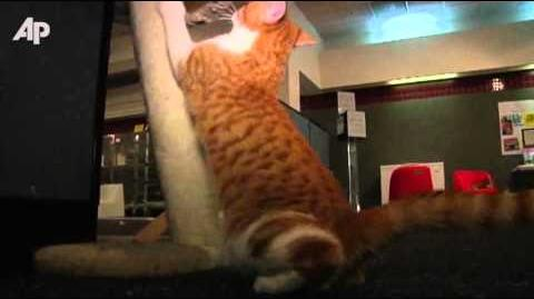 Daniel the Cat Helps Milwaukee Shelter