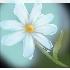 Голубой_цветок
