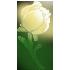 Белая_роза