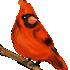 Красный_кардинал