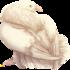 Белый_голубь