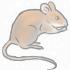 Звёздная мышь