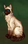 Котик1