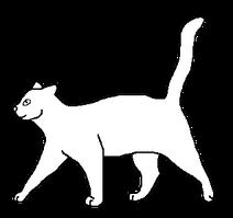 Шаблон короткошёрстного кота