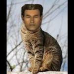 Benny The Cat