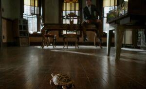 S05E06-Clyde crawling
