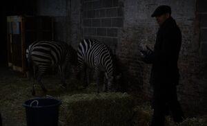 S03E14-Holmes and zebras