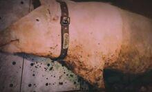 S07E05-Truffles green
