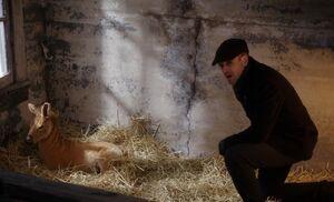 S03E14-Holmes and quagga