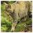 Wilgvacht's avatar