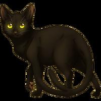 Black Nekomata