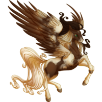 Dark Bay Pinto Pegasus