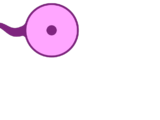Flagellocyte
