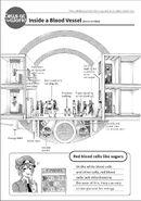 Inside a blood vessel