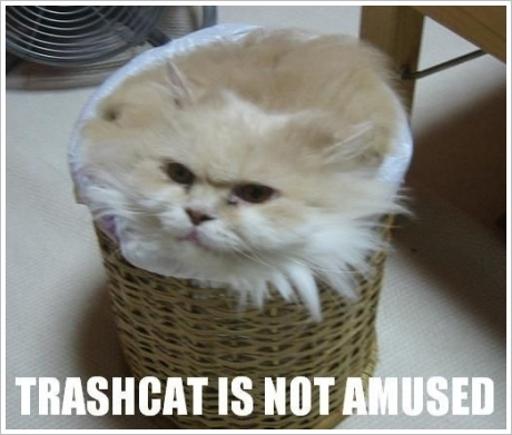 File:Lolcat-1april-trashcat.jpg