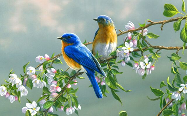 File:Viewing-paintings-flowers-birds-animals-desktop-1920x1200-wallpaper-l-a-ibackgroundz.com .jpg