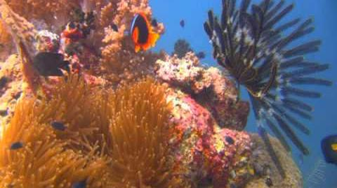 Beneath the Waves, A Relaxing Coral Reef Journey Set to Peaceful Music