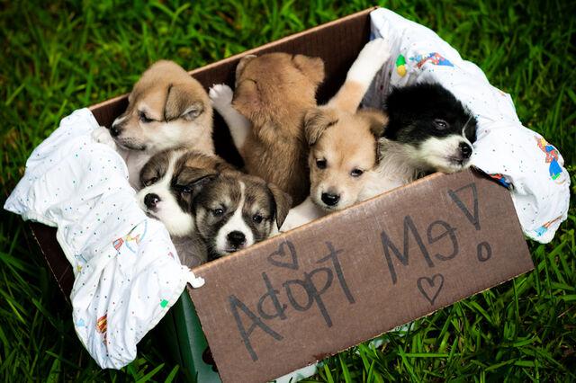 File:AdoptMe.jpg