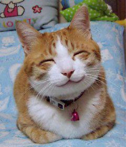 File:Happy cat.jpg