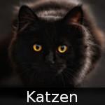 File:DE-Tiere-cats.jpg