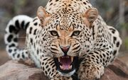 Big-Cats-wild-animals-34365410-1920-1200