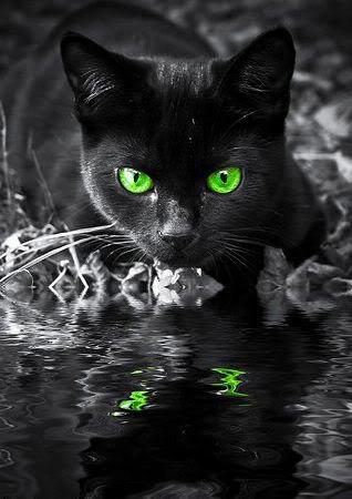 File:BlackKitty.jpg