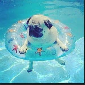 File:Summer pug.jpg