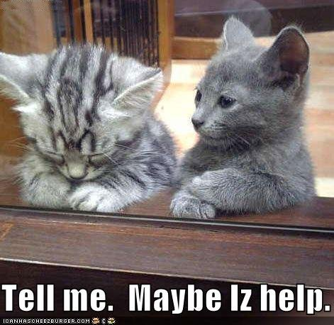 File:Funny-pictures-kitten-offers-to-help-sad-friend.jpg